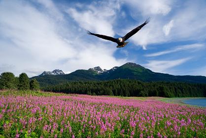 buka mata...bebaskan dirimu....dan akan kau dapati betapa indah dunia yang penuh warna...(diambil dari National Geographic Channel)